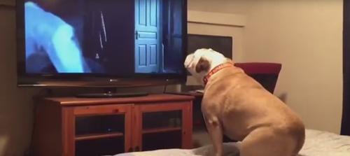 собака смотрит ужасы
