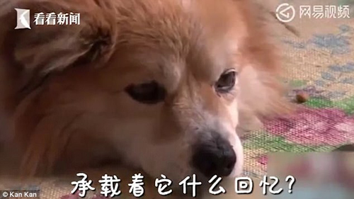 собака три года ждала хозяйку