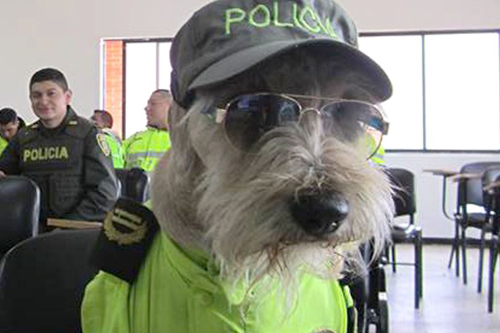 бродячий пёс стал полицейским