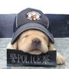 самые милые полицейские собаки