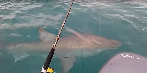 акула рассердилась на рыбаков