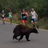 медведь напугал бегунов