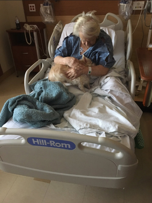 собаку пронесли в больницу