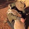 кенгуру обнимает спасителя