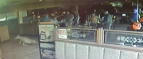 олень ворвался в ресторан