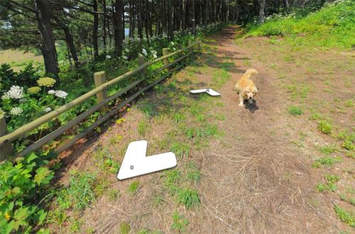 собака на панорамной карте