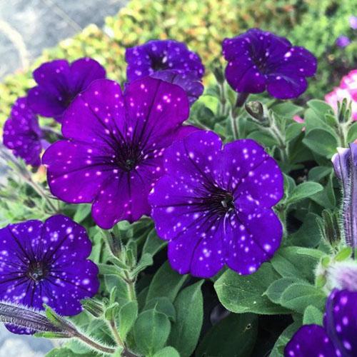 вселенные на лепестках цветов