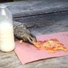 игуана украла пиццу