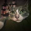 недостатки пропавшей кошки