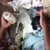 козлёнок родился без глаз