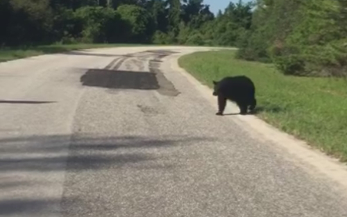 медведь пообщался с полицейским