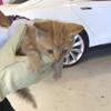 котёнок внутри машины
