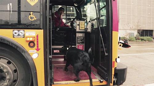 собака ездит в парк без хозяина