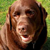 пёс съел шашлык с шампуром