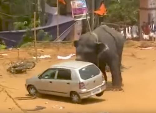 слон перевернул автомобиль