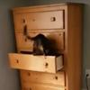 кот закрывается в комоде