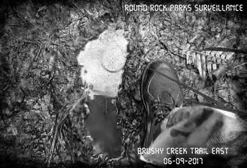 очень большие следы в лесу