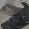 птичка прилипла к пластику
