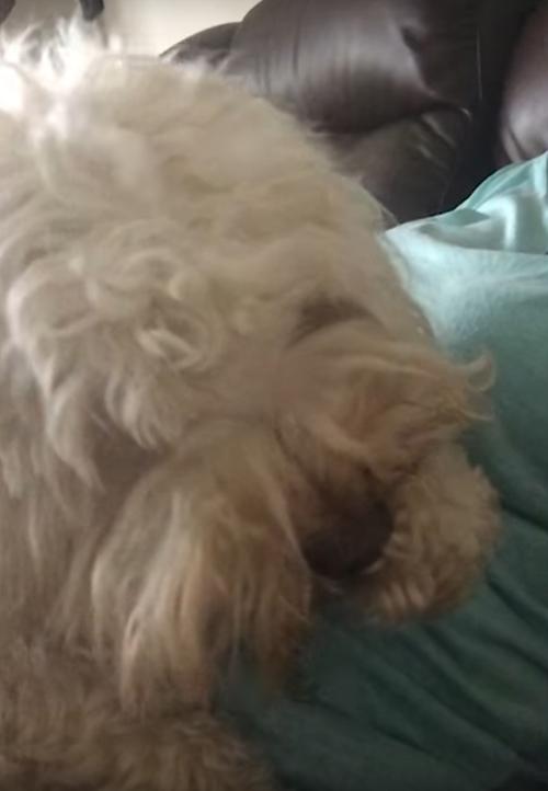 собака обкусывает себе когти