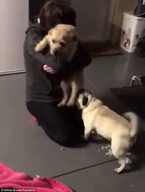 собака вернулась домой