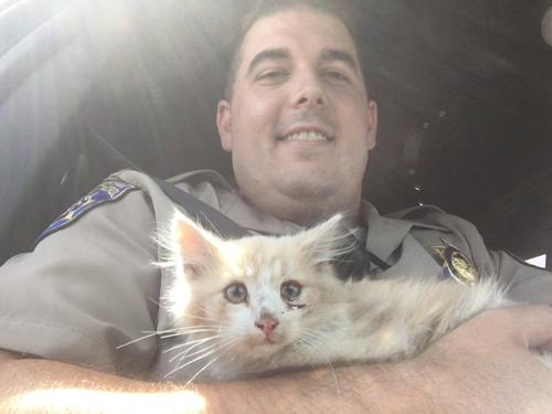 потерявшийся котёнок на мосту