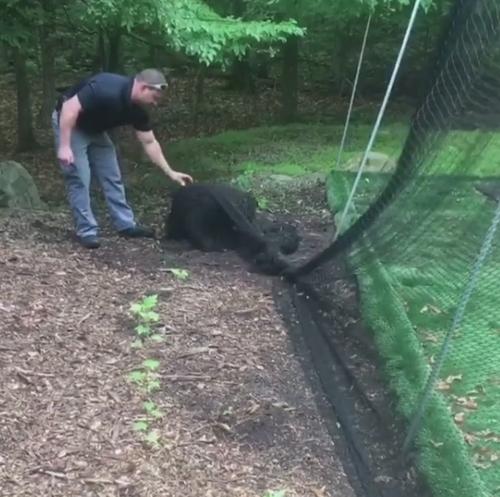 медвежонок угодил в сеть