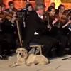 собака слушает симфонию