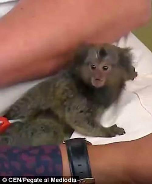 обезьянка укусила модель