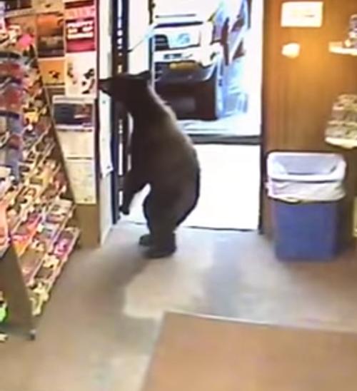 продавец прогнал медведя