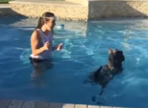 пёс плавает на спине друга