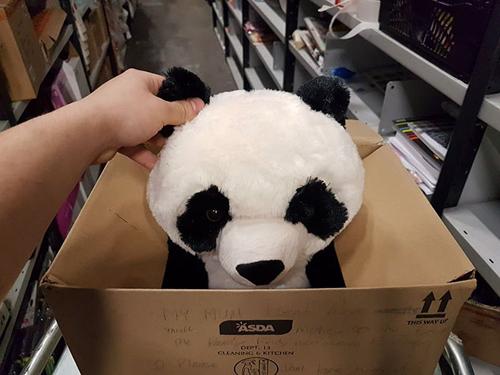мальчик и игрушечная панда