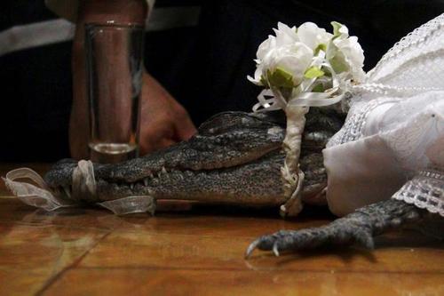мэр женился на крокодиле