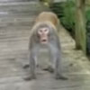 обезьяны напали на туристов
