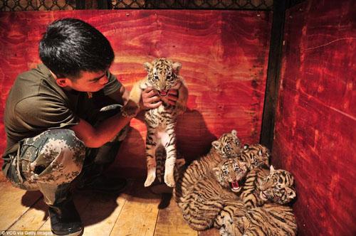 новые обитатели зоопарка