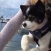 щенок помог крутить педали