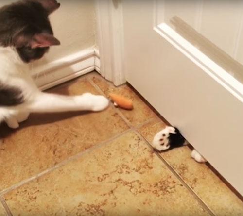 странная забава кошек