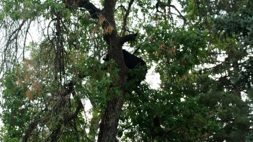 движение перекрыли из-за медведя