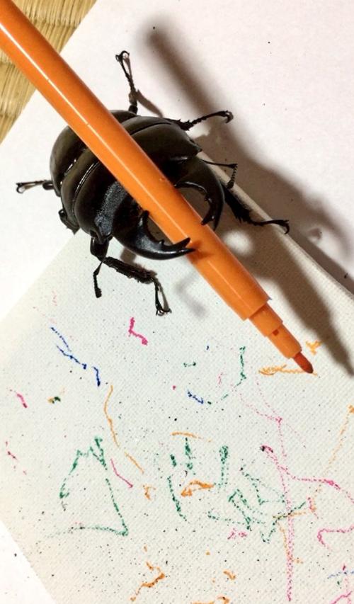 жук-олень умеет рисовать