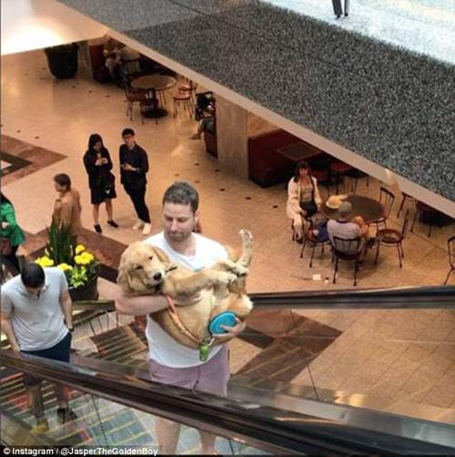 хозяин помог псу на эскалаторе