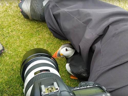 любопытная птичка-тупик