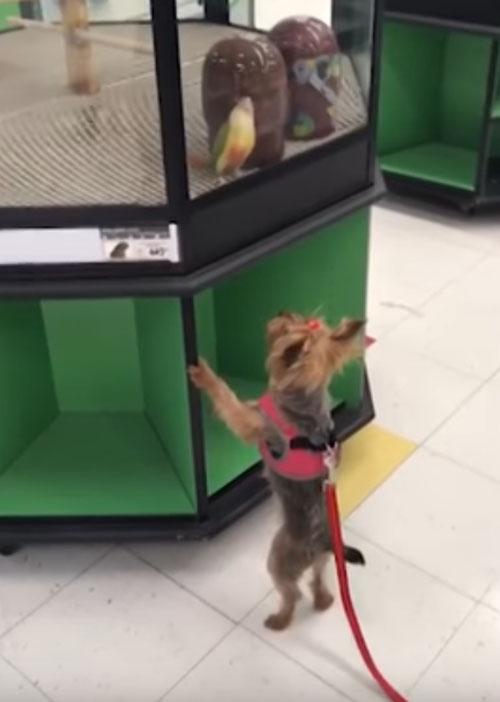 собачка влюбилась в попугая