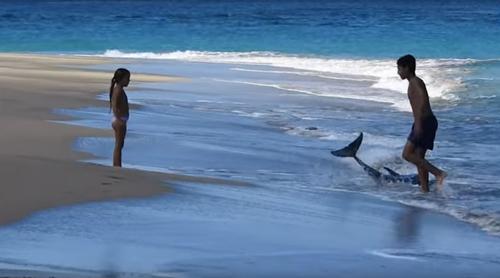 семья отдыхающих спасла дельфина