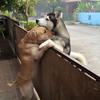 собака спасается от одиночества