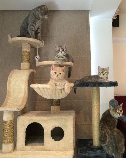 кот объедает своих детей
