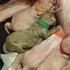 невероятный зелёный щенок