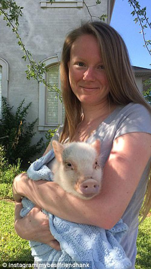 свинка помогла собрать деньги
