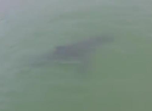 акула заинтересовалась женщинами