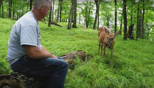 угощение для семьи оленей
