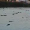 озеро кишит аллигаторами