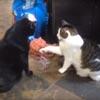кошка передумала драться